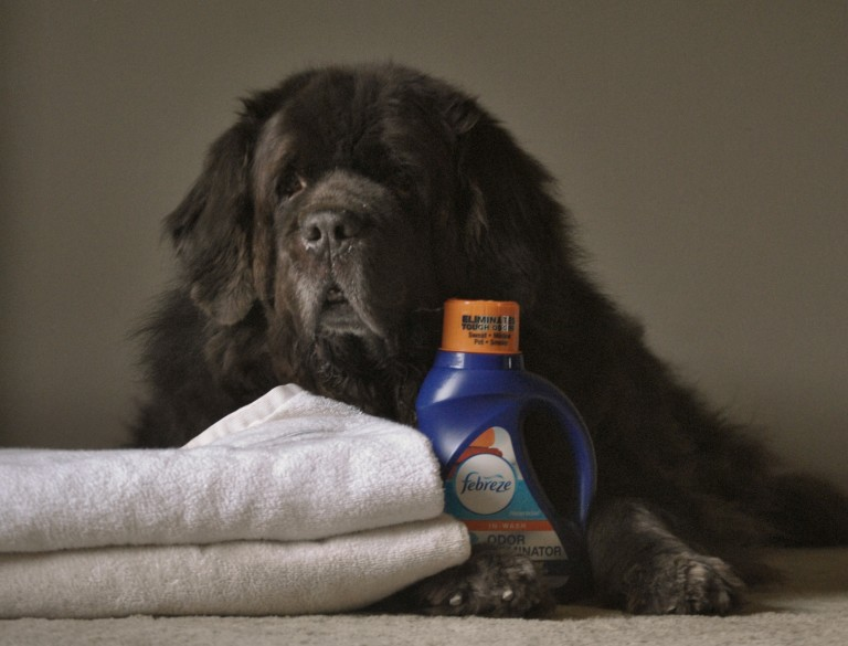 Dog Towels Stay Odor Free With Febreze Febreze In Wash